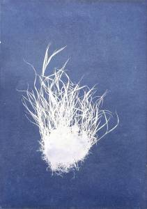 """Welz, Richard: """"Rasenstück"""", 2013, Cyanogramm auf finnischer Holzpappe, 70 x 50 cm, Peis: 680 EUR"""