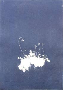 """Welz, Richard: """"Klee"""", 2013, Cyanogramm auf finnischer Holzpappe, 70 x 50 cm, Peis:  680 EUR"""
