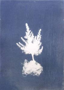 """Welz, Richard: """"Tanne"""", 2013, Cyanogramm auf finnischer Holzpappe, 70 x 50 cm, Peis: 680 EUR"""